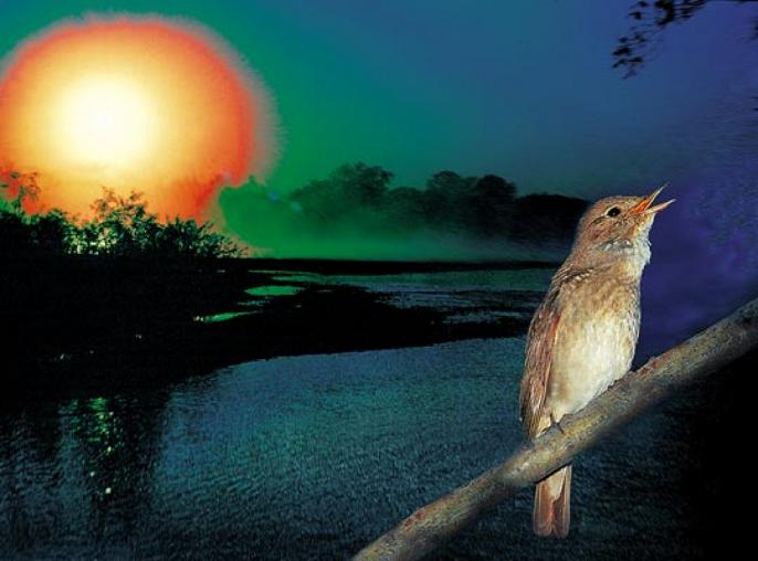 Доброй ночи поют соловьи картинка