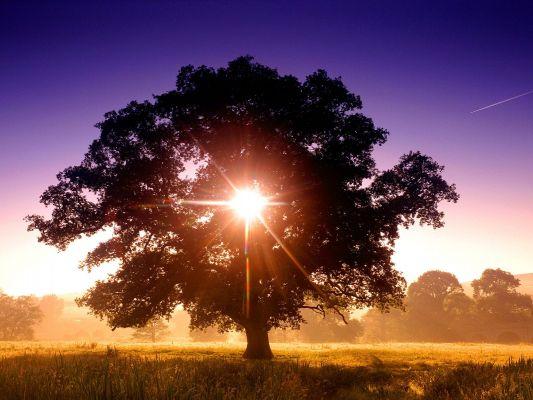Пейзажи. дерево.  Теги.  Обои солнце на рабочий стол.