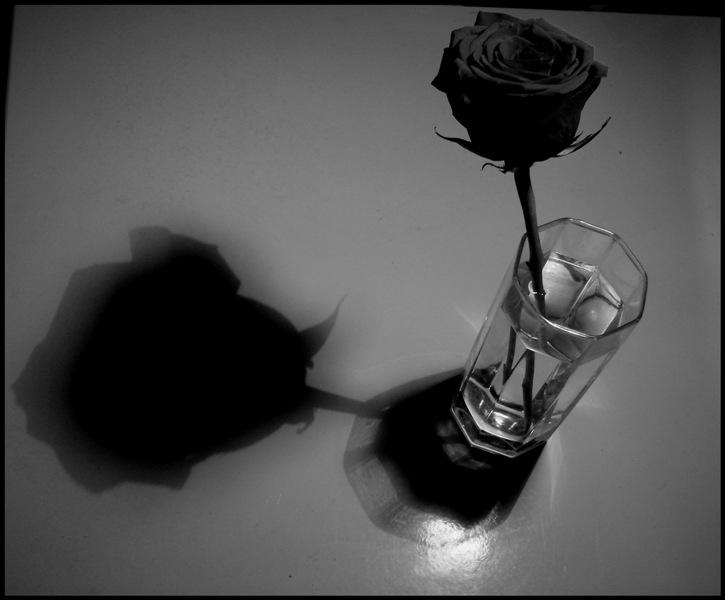 Картинки розы черной