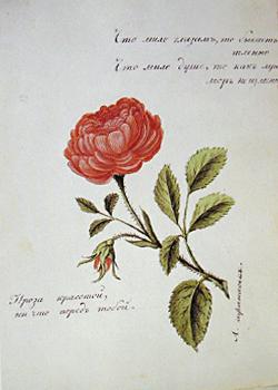 доставки всем розы в стихах пушкина отцом