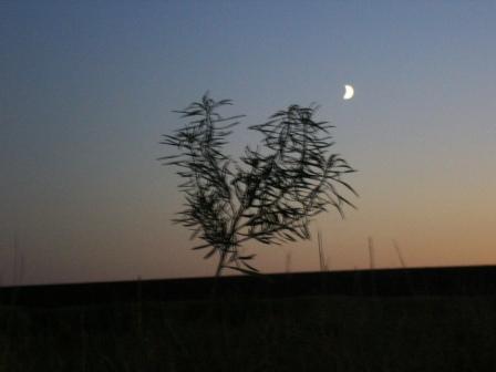 http://www.proza.ru/pics/2009/07/27/106.jpg?3327