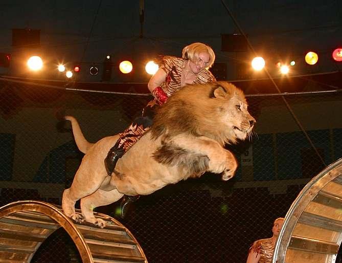 19 29 58 тоторо моя тема цирк