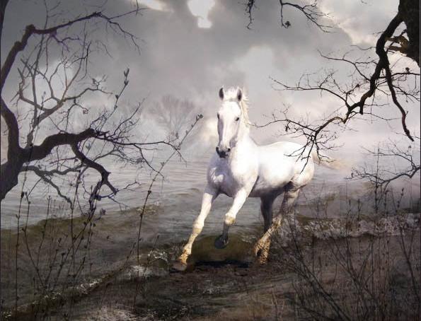 картинка белый конь
