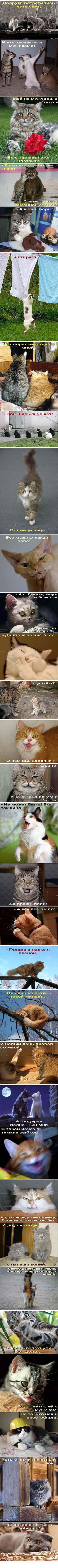 Кошкомикс-36 Подружки