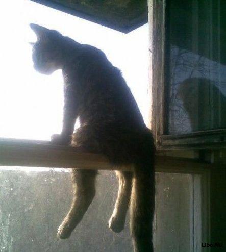 Сижу на подоконнике кот