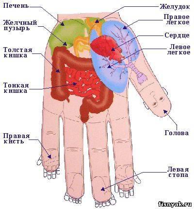 Как узнать свои болезни по руке