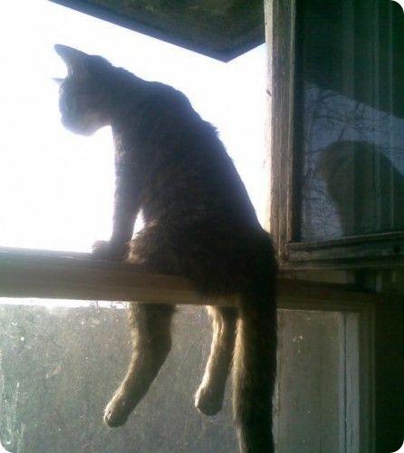 Сказки о ленивым коте