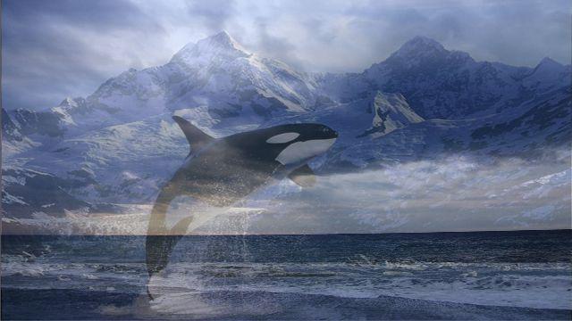 http://www.proza.ru/pics/2010/11/30/1117.jpg?5964