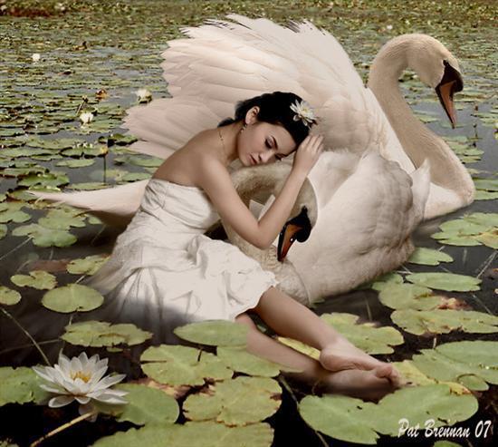 Песня лебедь белая женщина странная