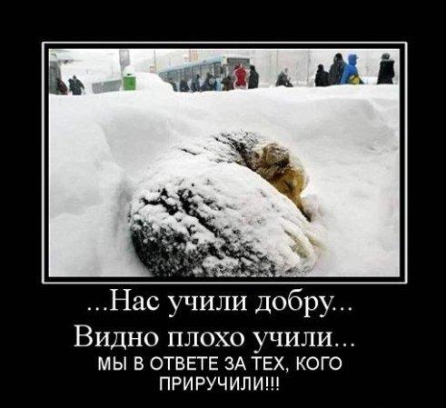 Бездомного бога картинки
