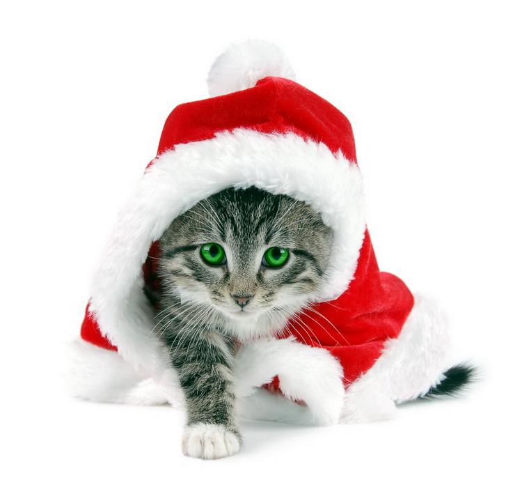 http://www.proza.ru/pics/2010/12/24/1377.jpg