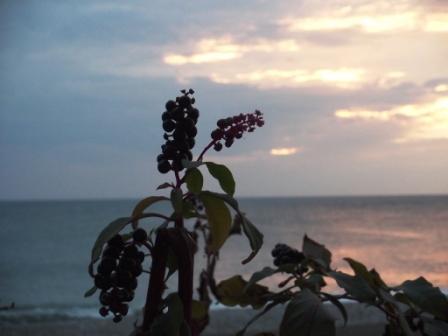 http://www.proza.ru/pics/2011/01/21/1449.jpg?3341