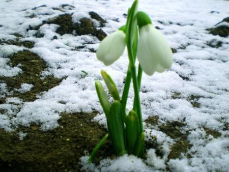 видео урок пробуждение природы весной