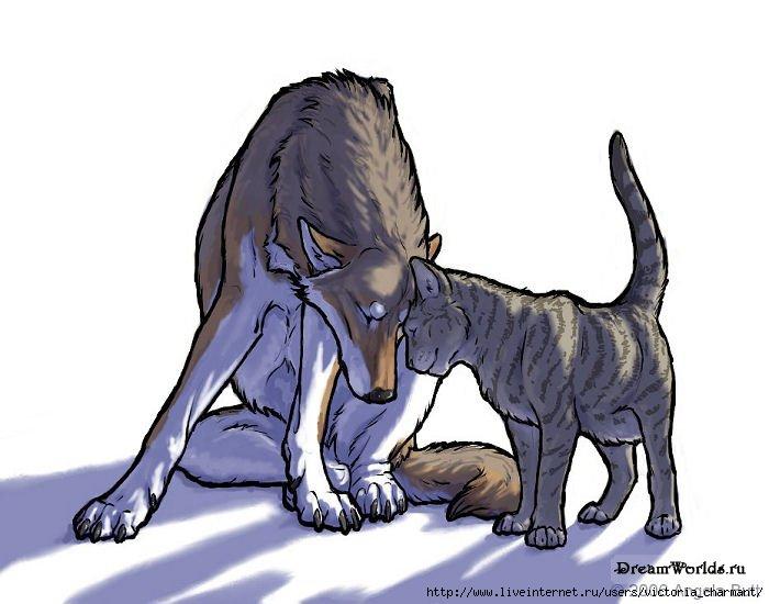 Фото волка и кота