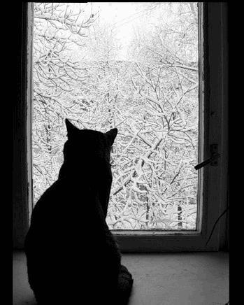 песня кружит снег за окном