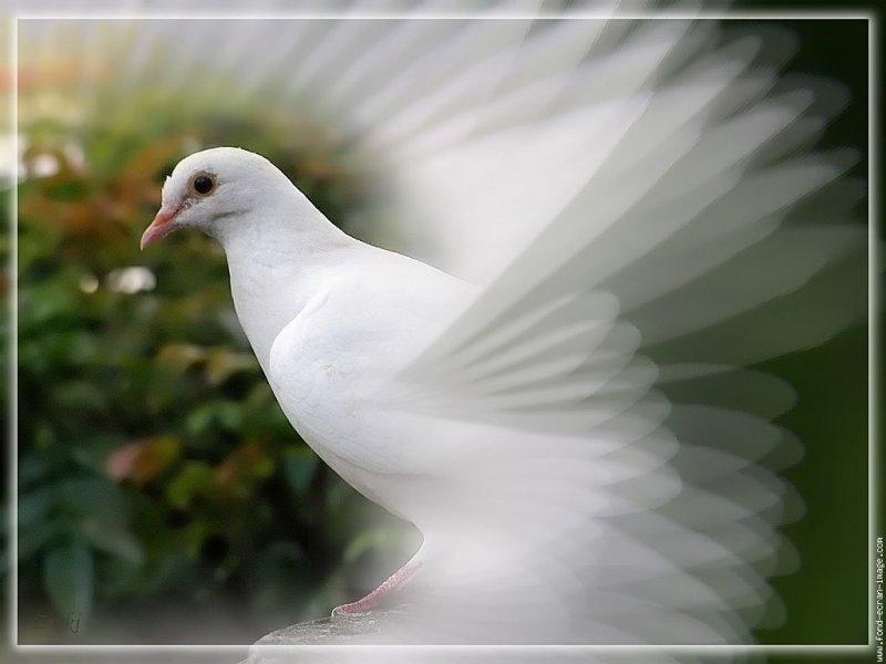 Прилетай ко мне, моя голубка.