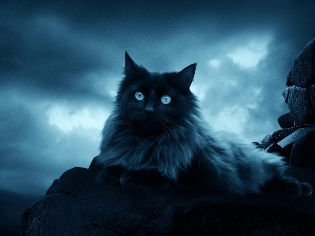 Кот и девушка ночь