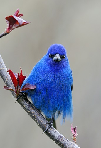 Виа Синюю Птицу