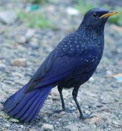 А вообще синих птиц в природе до зелени.