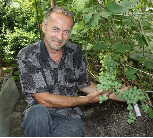 виноград шахиня ирана описание сорта фото