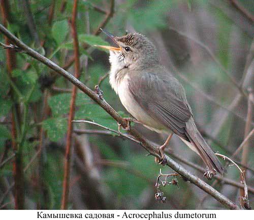 15 декабря 2009.  Птицы- садовые помощники.