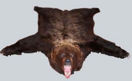 Шкура медведя.  Обсудить.
