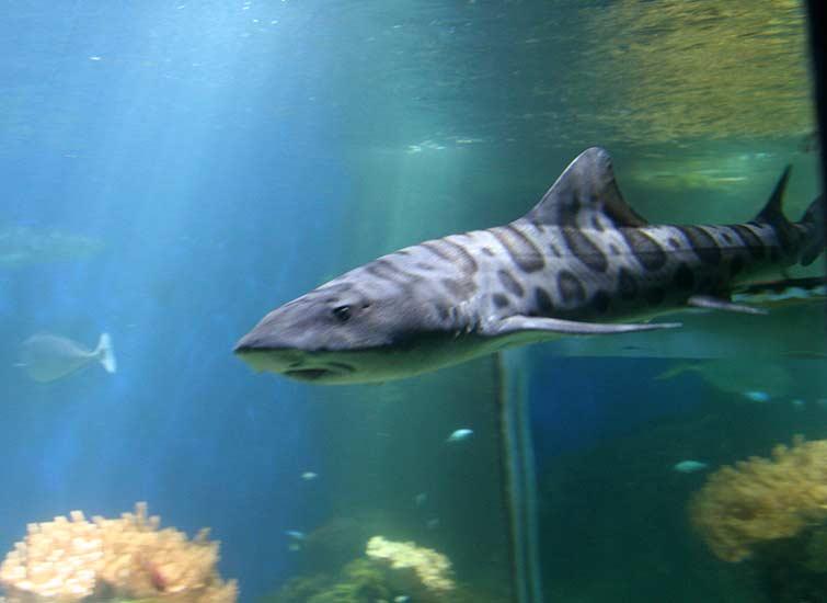 Возможно, это какой-то представитель вида кошачьих акул.