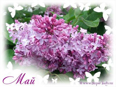 http://www.proza.ru/pics/2012/03/10/1798.jpg