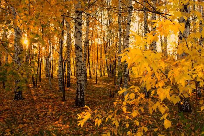 фото грибы в осеннем лесу