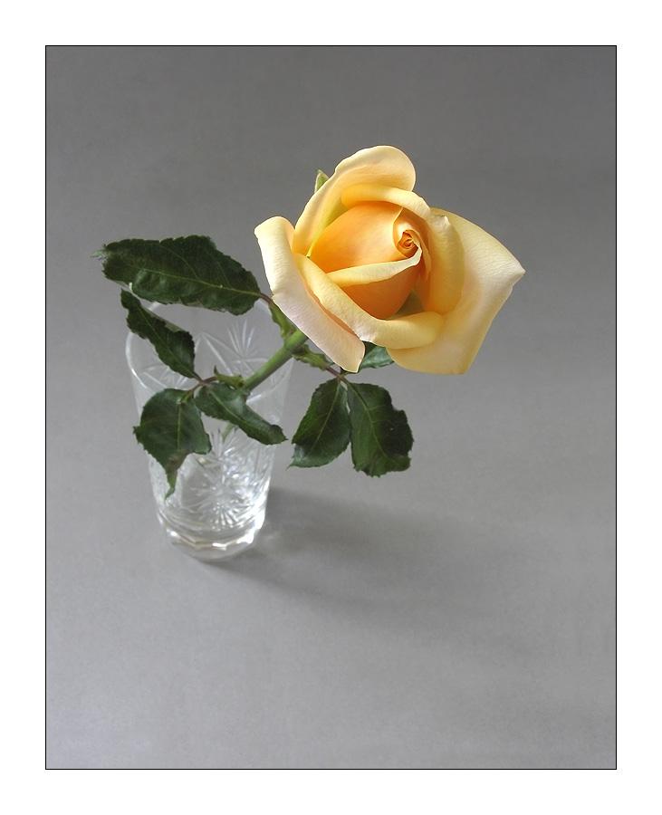 результате одинокая роза открытка должны выполнять требования