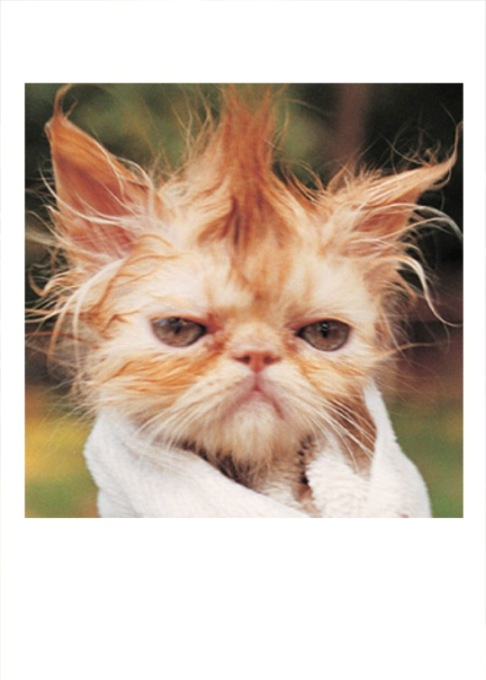 angry wet cat gif