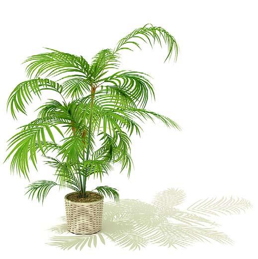 Растения для ландшафтного дизайна 3d