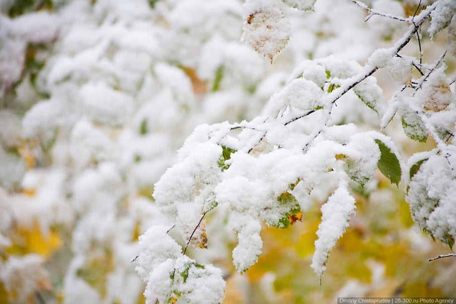 Из заметок в контакте первый снег