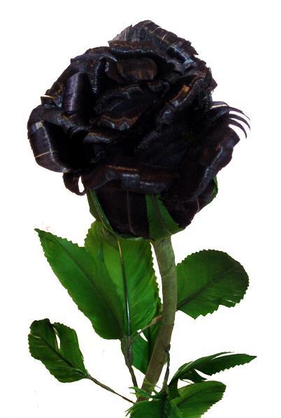 Музыку роза