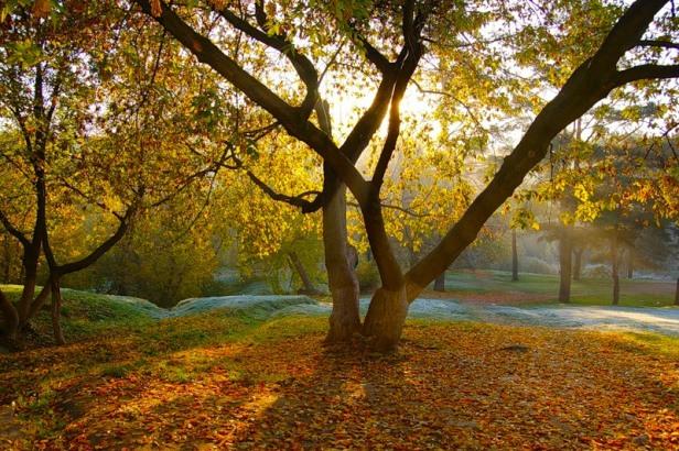 Осеннее утро наталья шуба проза ру