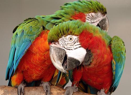 Анекдот про попугая охуенно день прошел фото 740-247
