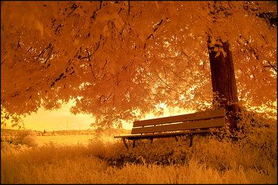 Картинки:осень: