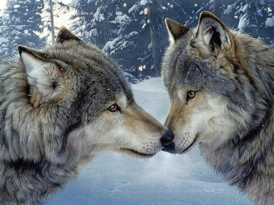 Две волчицы.