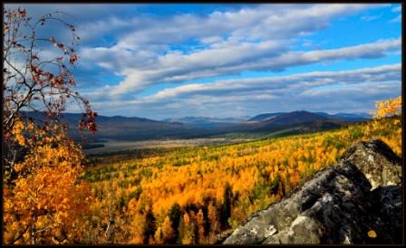 Поздняя осень в лесу (Владимир Лыгин) / Проза.ру
