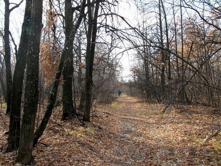 осенний лес поздней осени