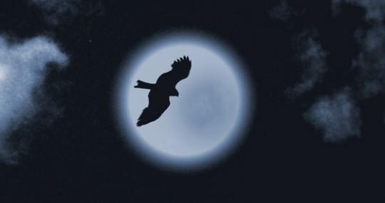Бессонница - ночная птица 1120
