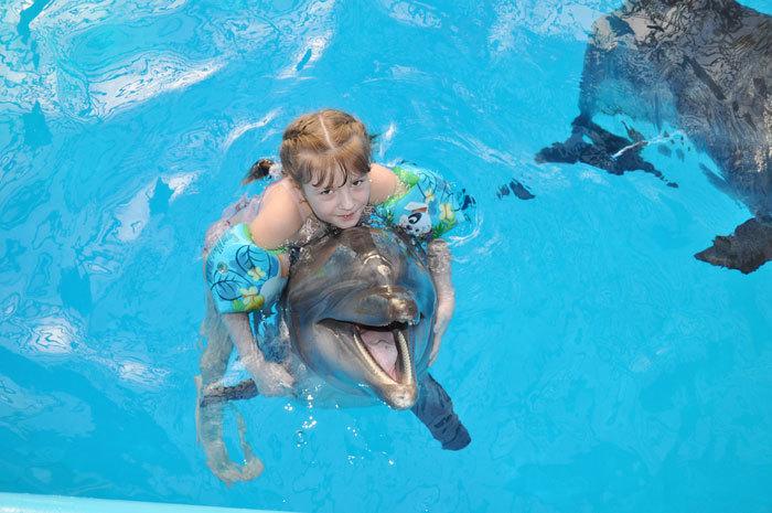 Подарки плавание с дельфинами 203