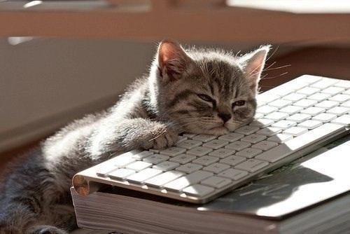 скачать игру котята на компьютер