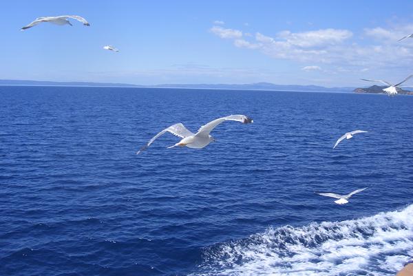 Гуси лебеди утки в Тульской области