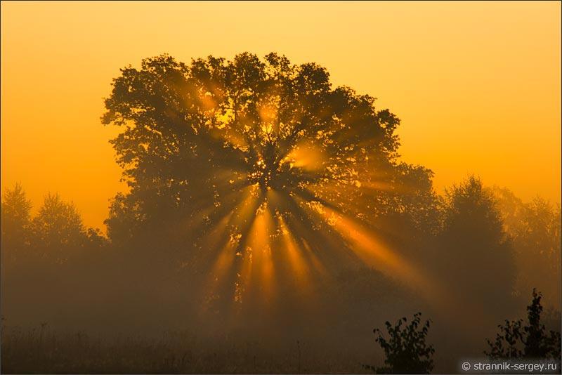 в оранжевом тумане стих