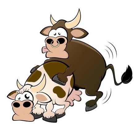 Корова и бык смешная картинка