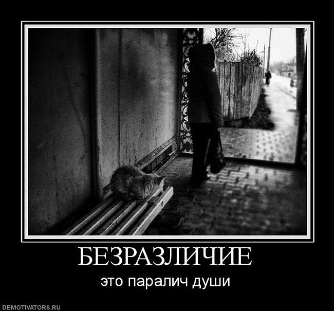 Статусы с картинками про равнодушие