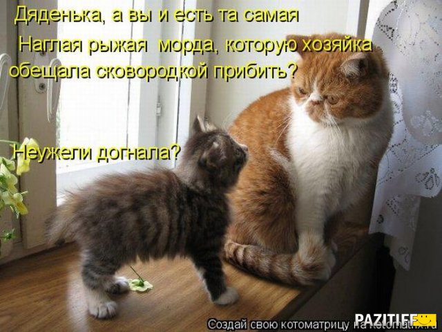Коты — этот символ имеет несколько легко интерпретируемых значений.