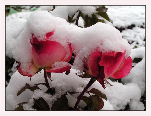 Любовь из снега