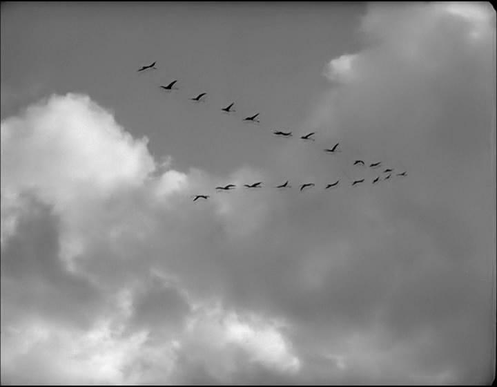 Журавли летят картинки и фото